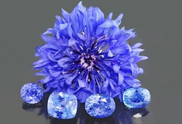 Cornflower blue sapphires next to a real cornflower